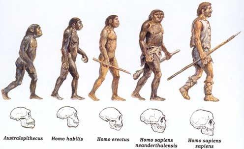 HOMENS PRIMITIVOS-EVOLUÇÃO